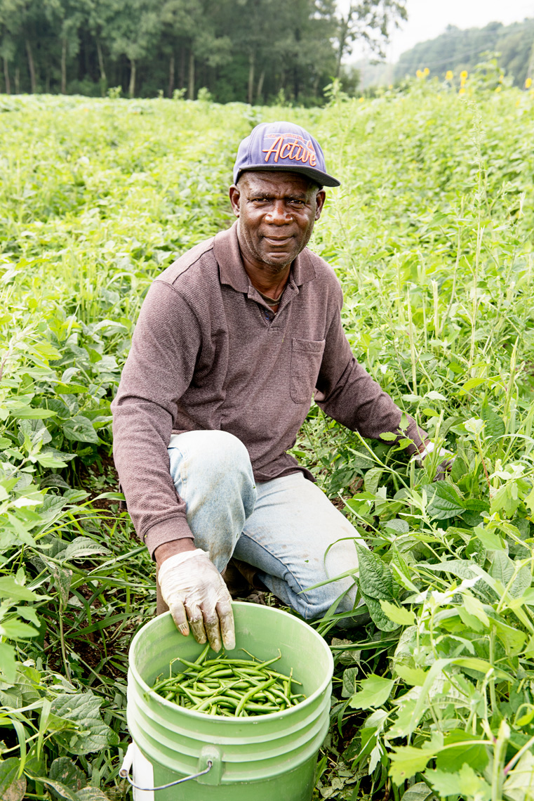 Jamaican migrant worker harvesting green beans Ward