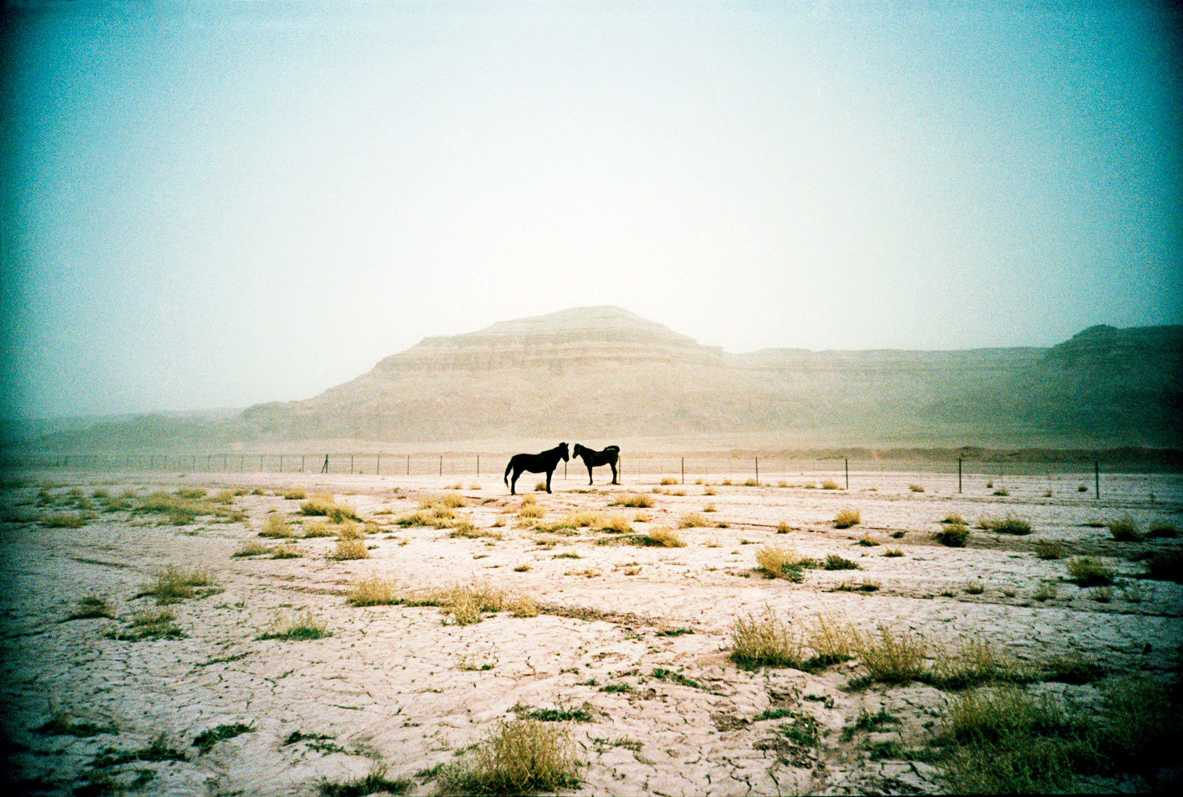 horses along the road in the Navaho Reservation Arizona
