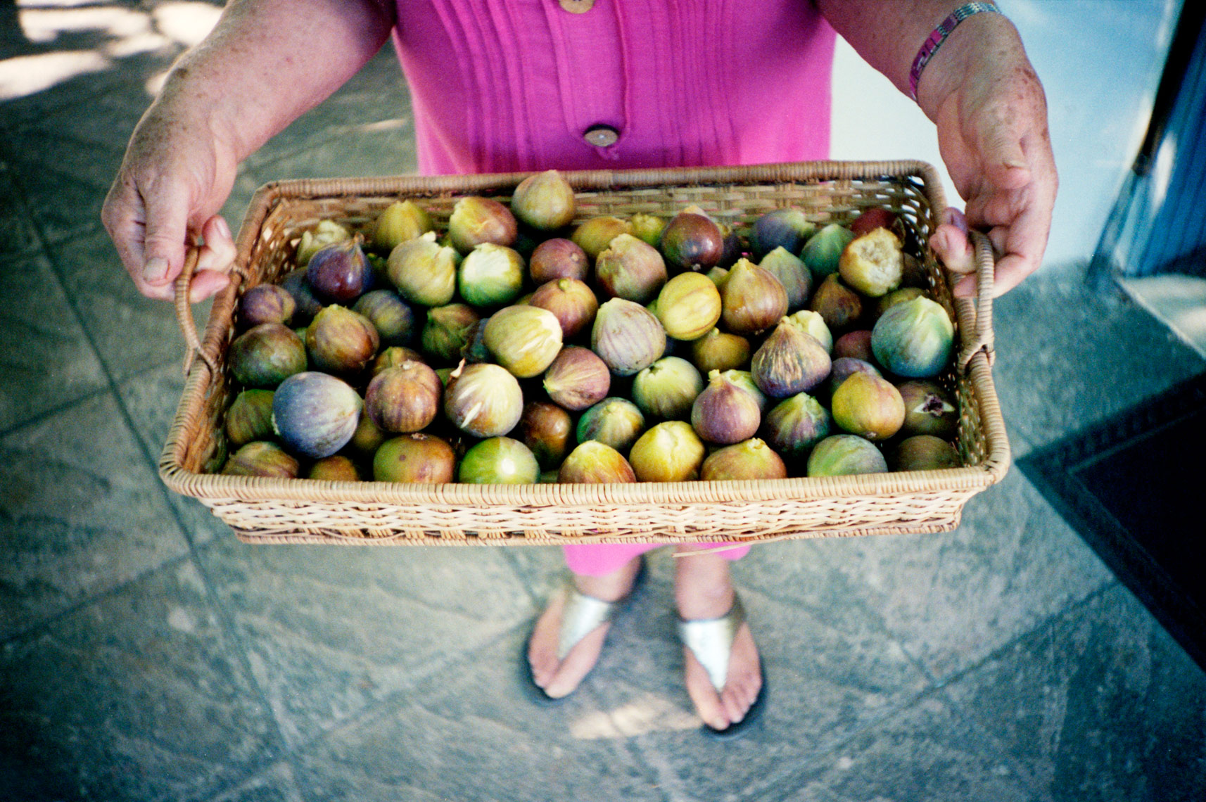 basket of figs on trullo farm in Apulia Italy