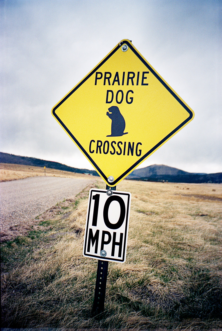 prairie dog crossing Valles Caldera National Preserve New Mexico