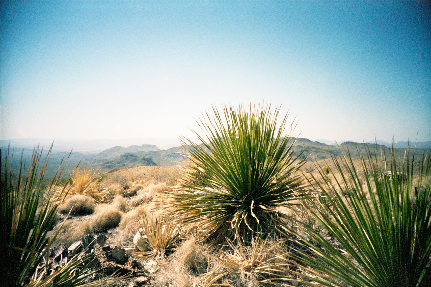 cactus in Big Bend National Park, Texas
